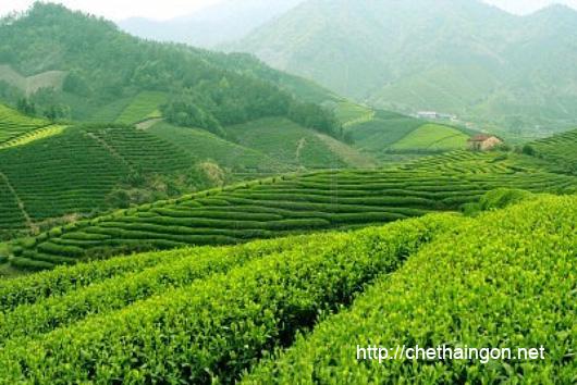Khám phá vùng chè ngon của đất nước Tân Cương - Thái Nguyên