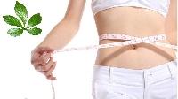 Các loại thảo mộc tự nhiên giúp giảm béo hiệu quả